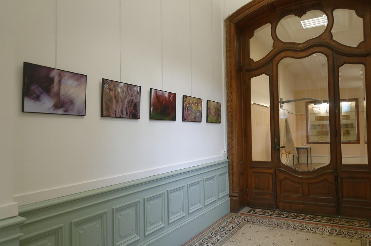 """exposition Shinrin-Yoku de mapie des vignes et Helena Sellergren.""""À la lueur des saisons"""" - photographies 35X53 cm : Philippe Cadu"""