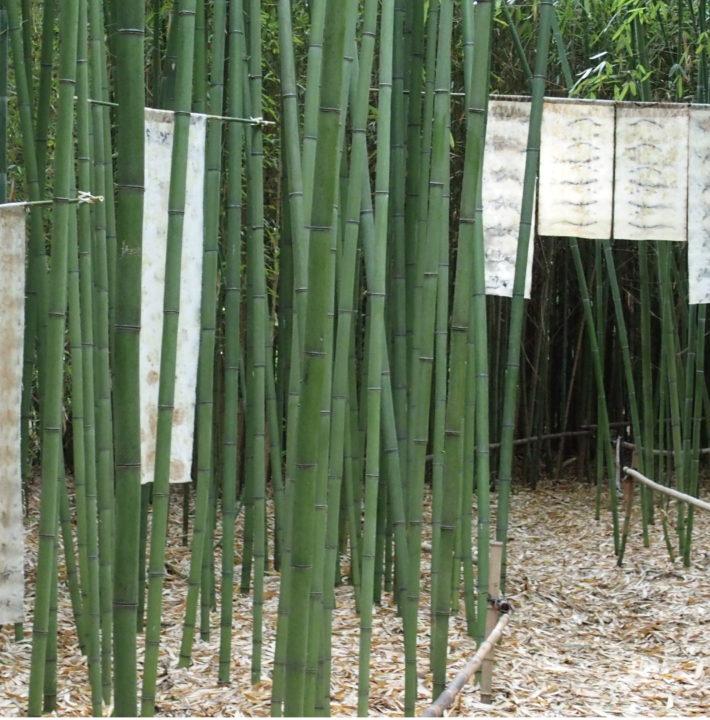"""exposition Shinrin-Yoku de mapie des vignes et helena sellergren.Noren """"Est"""" et Kakemonos """"Haïkus de la Forêt"""""""